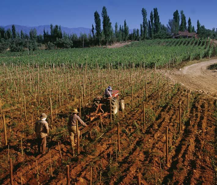 Mendoza: alma de los vinos argentinos   Imagine