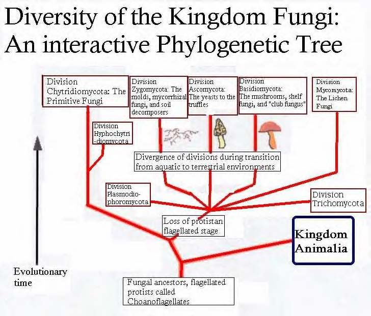 Tree Fungi Diagrams Search For Wiring Diagrams
