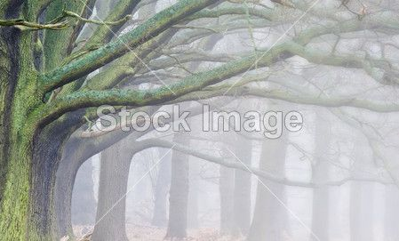 Winter Autumn Fall foggy landscape of forest and avenue of trees