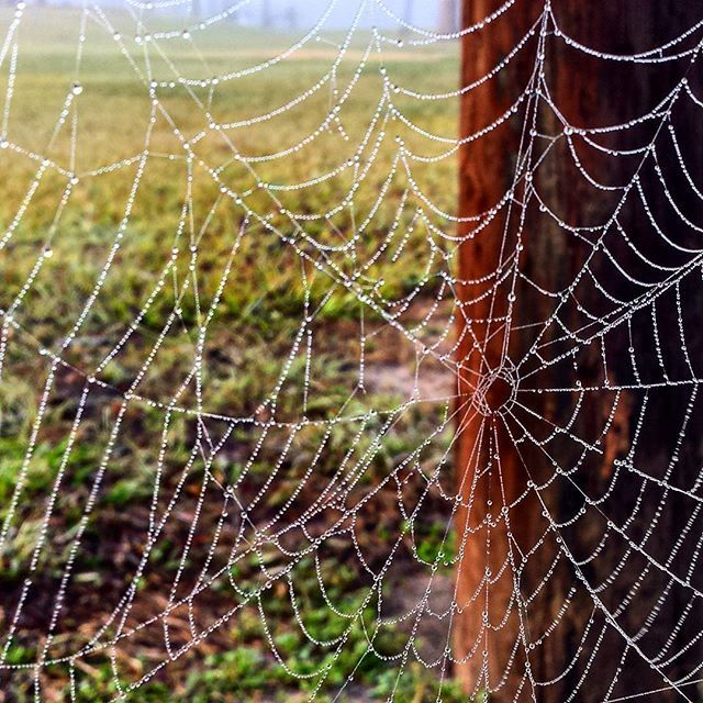#photography #naturephotography #spiderweb #dew #natural