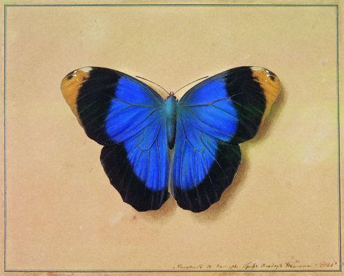 Федор Петрович Толстой. Бабочка