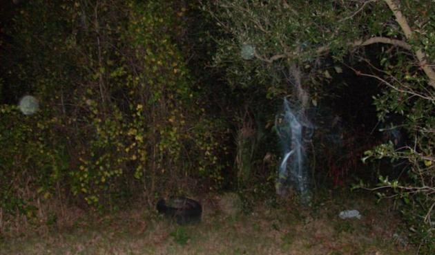Ghost Appears in Haines City, Florida Backyard. (click link for full story)