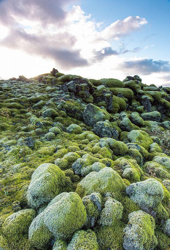 Iceland - Moss field  #Iceland #Landscape #nature #moss #sunset