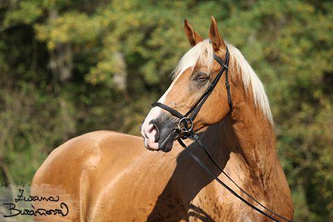 Zuzana Buráňová – fotografie koní a psů