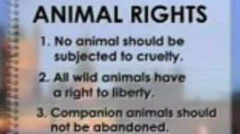 Petition · HE President of India, Hon'ble Speaker, Lok Sabha, HE Vice President of India: Whether animals have rights, why treated them goods and property? · Change.org