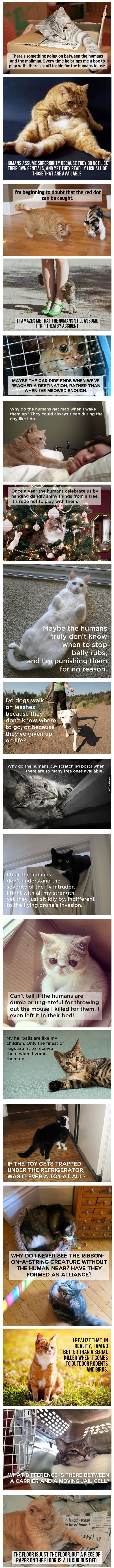 20 Cat Thoughts That Will Change Your Outlook On Everyday Cat Life