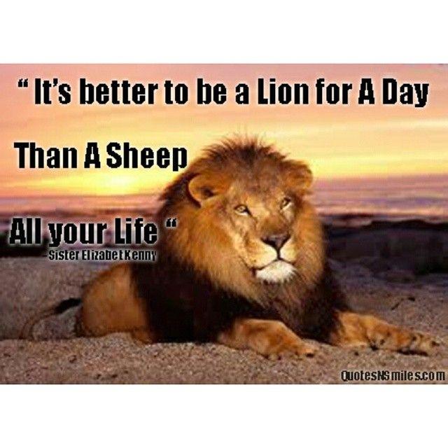 #PicOfTheDay #QuoteOfTheDay #lion #powerful #LionStrong #StrengthOfALion #Leo