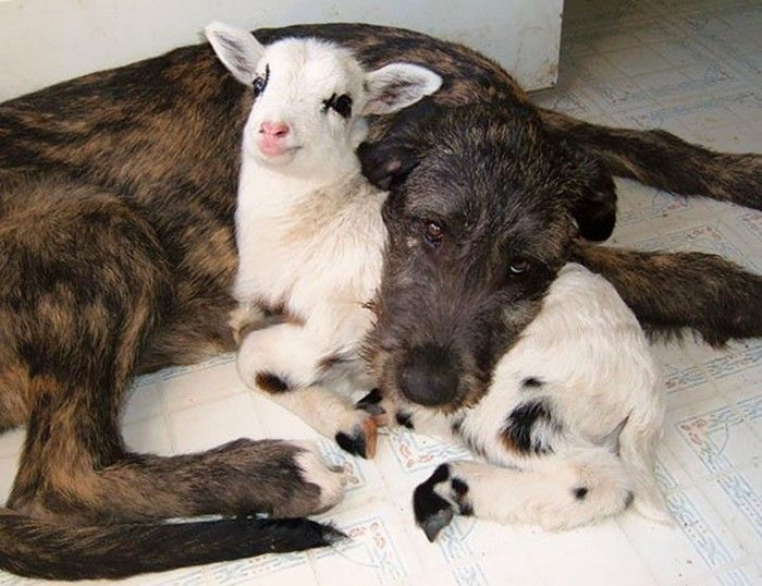25 unlikely animal friends sleeping together | Awesomelycute - Cute Kittens, Cute Puppies, Cute Animals, Cute Babies and Cute Things in General