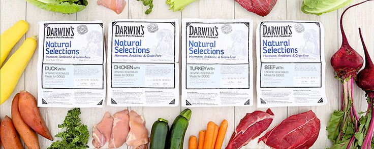 Darwin's Natural Pet Products offers the best in raw & prescription dog food as well as ZooLogics™ raw diet.