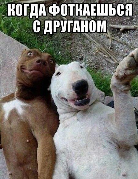 Фото приколы с собаками и щенками