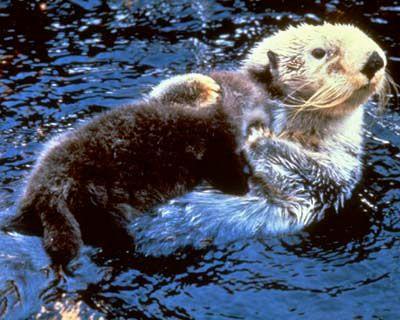 Populaire Les 101 meilleures images du tableau Mammifères marins (marin  BG01