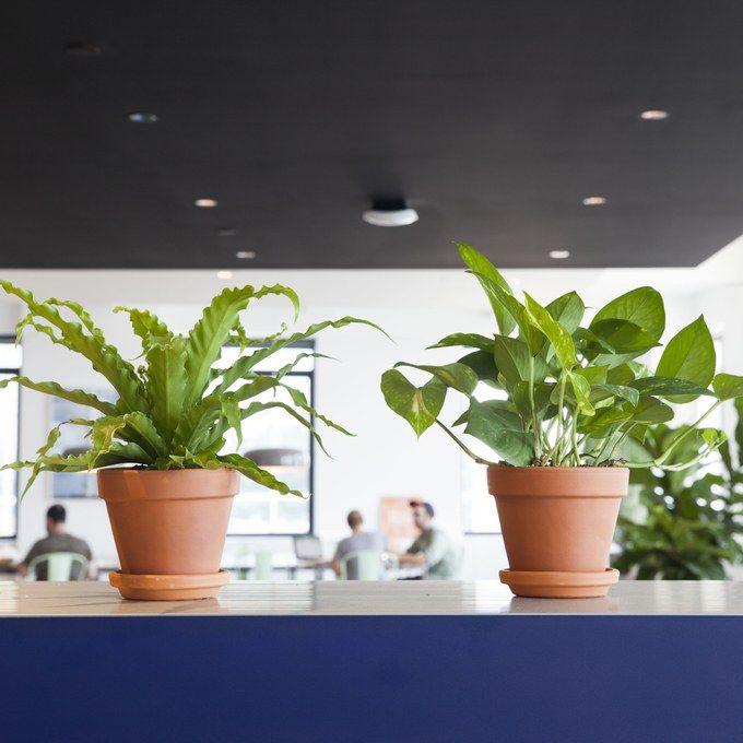 25 best ideas about Best office plants on Pinterest Best plants