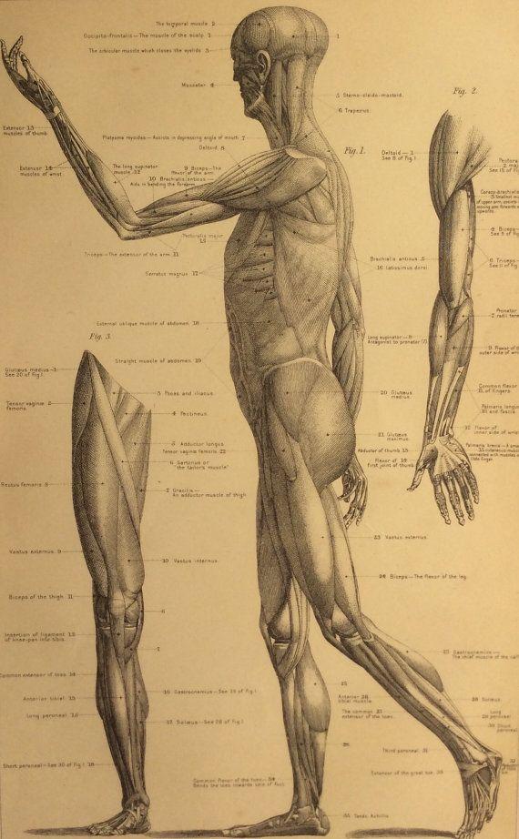 Anatomy aspect atlas fertility hand human human medical sex topographical