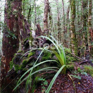 Kahurangi National Park Flora Royalty Free Stock Photo