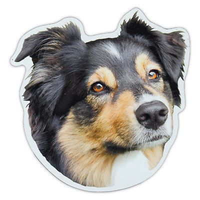 Magnetic #bumper #sticker - australian shepherd (aussie) magnet - #cars, trucks,  View more on the LINK: 	http://www.zeppy.io/product/gb/2/142047391801/