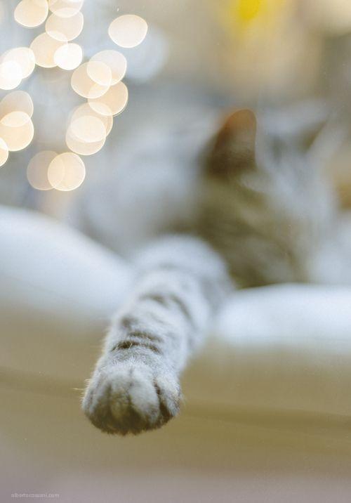 Lazy day...