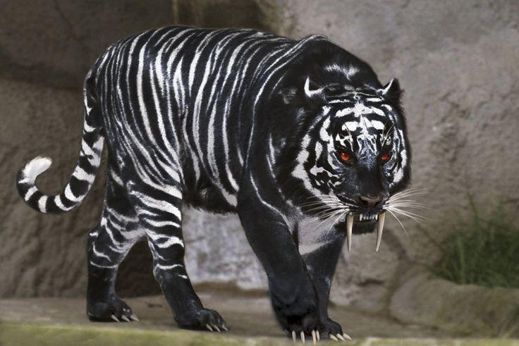 Black tiger with white stripes tiger 39 s pinterest - Tiger stripes black and white ...