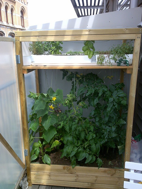 Balcony Greenhouse: Upcycle Items to create this!