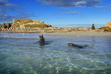 Best Penguin Island Tour with Dolphin and Sea Lion Cruise
