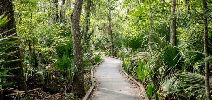 Jean-Lafitte-National-Park-a-New-Orleans-Swamp-980x463.jpg