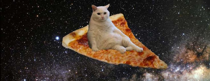 Cat Pizza Tumblr