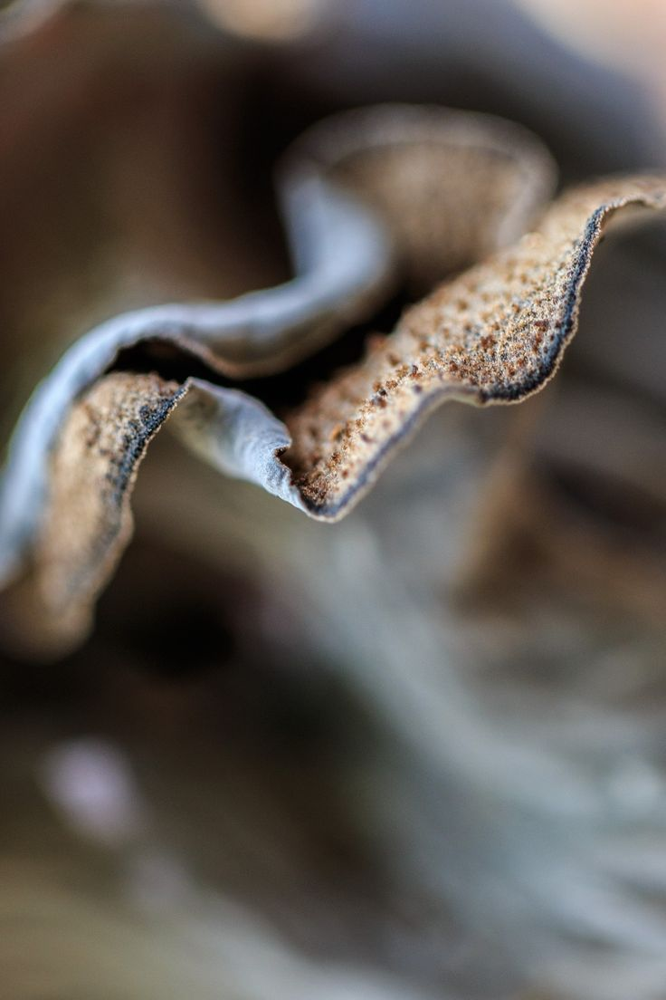 Trumpet of the Dead by Karin Pezel on 500px