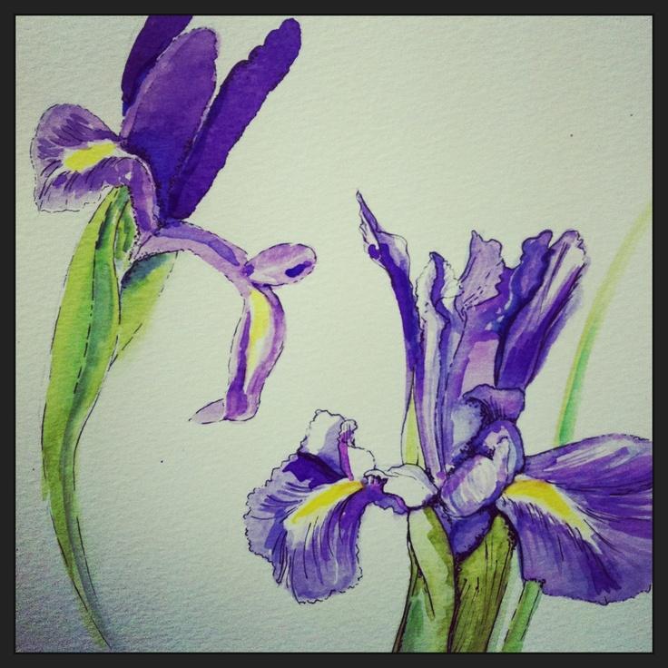 #iris #watercolours #art #sketching #drawing #artwork #purple #flowers #floralart #floral
