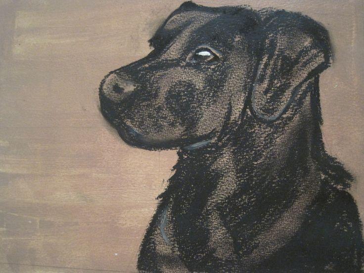 Charcoal on acrylic - black labrador