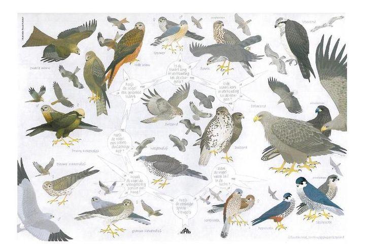 Zoekkaart Roofvogels