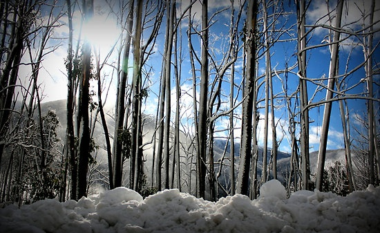 Snow - Falls Creek, Victoria by Madgee
