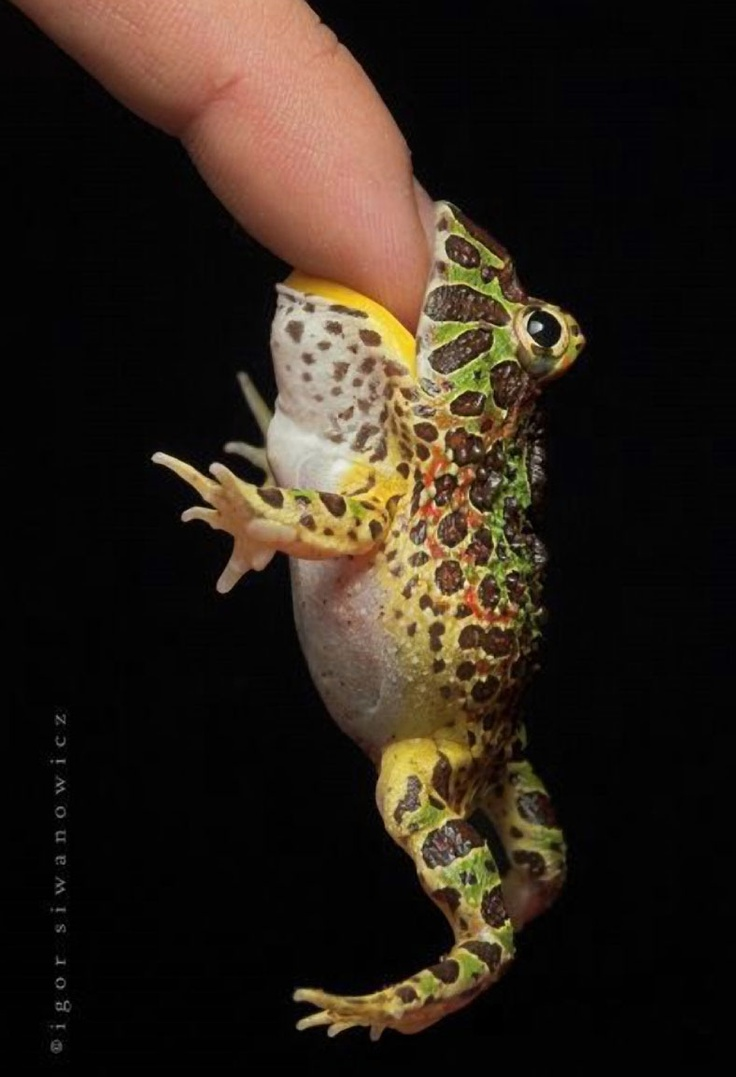 133 best snakes lizzards u0026 frogs images on pinterest animals