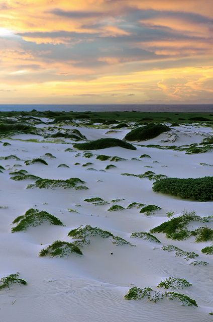 Dunes of Aruba at dusk. An amazing must see and do. #aioutlet #Aruba