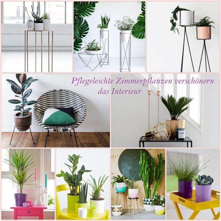 100 Schöne Zimmerpflanzen Bilder