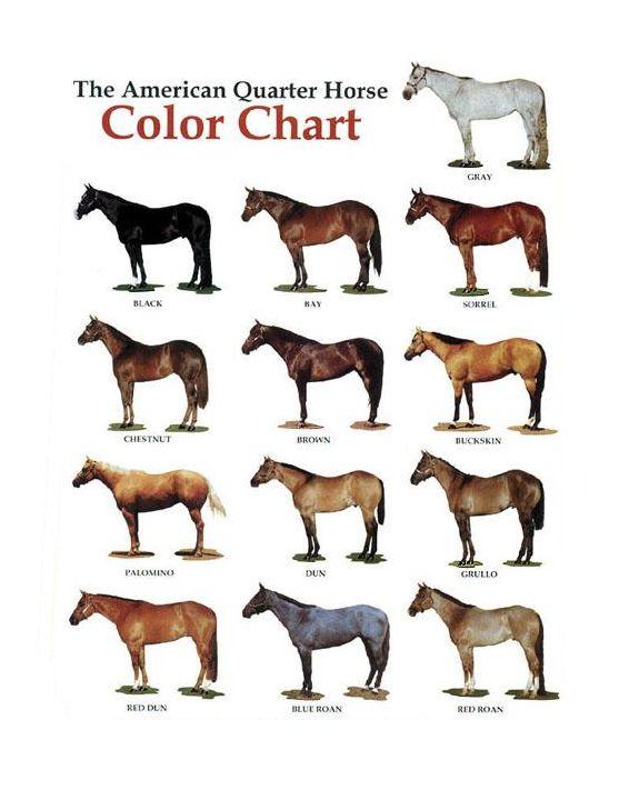 AQHA color chart | Horse color chart, American quarter ...