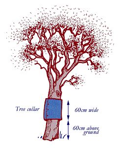 Tree collar should be 60cm tall and 60cm above the ground.