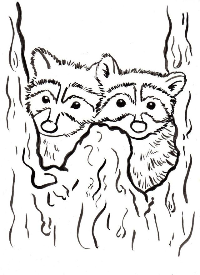 25 Inspiration Picture Of Raccoon Coloring Page Birijus Com Animal Coloring Pages Coloring Pages Cartoon Coloring Pages