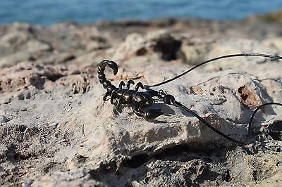 Gold Black Scorpion / Jewelry Mens Womens Pendant Necklace / Handmade