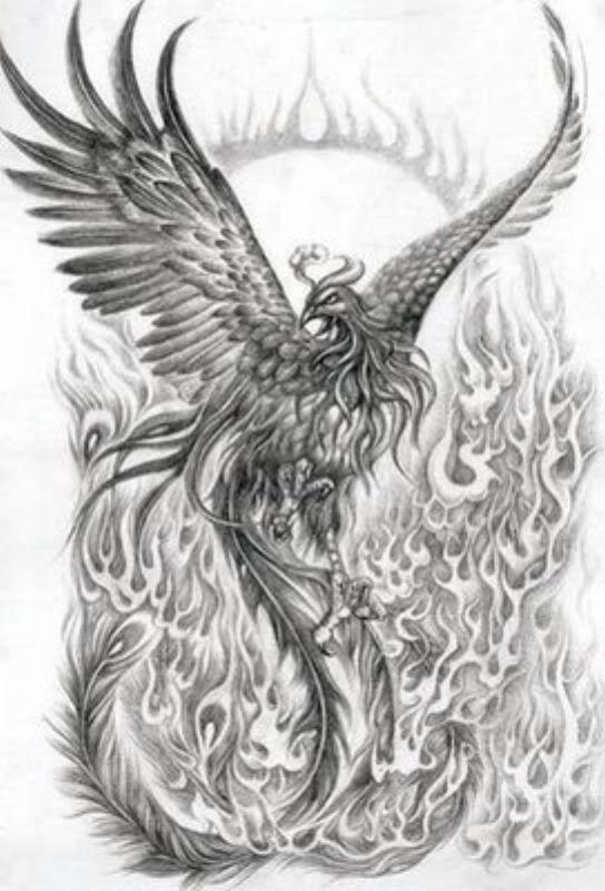 phoenix tattoo | Phoenix Tattoo Image - Phoenix Tattoo Picture, Graphic, & Photo