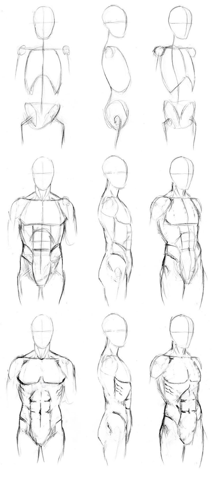Basic Male Torso Tutorial by timflanagan on deviantART  Step 1: Skeleton Sketch your basic structure outline. For the torso we will of course need the vertebrae, ribcage and pelvis. Don't worry about sketching these the -exact- shape of the actual bones.  Step 2: Muscles Sketch in the general shapes of the different sets of muscles. Check your muscle layout with an anatomy chart or constructive anatomy book.  Step 3: Skin In this stage, you're making your sketch ... (read the rest at the…