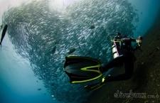 Diving in Bali – Tulamben and beyond. The Liberty wreck, the Drop Off, Kubu, Seraya Secrets and more...