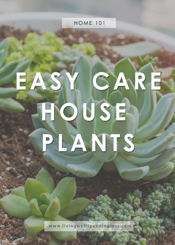 1000 ideas about low maintenance backyard on pinterest for Low care plants
