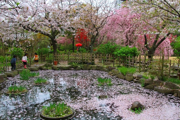 Hiroshima 2012 Spring.