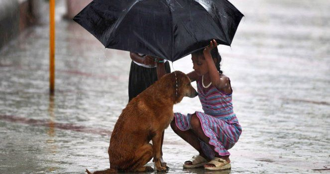 Save the Animals who are Alone in the Streets. No More Abandonment!