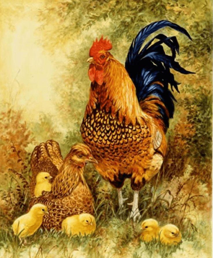 Картинки петушка и курицы