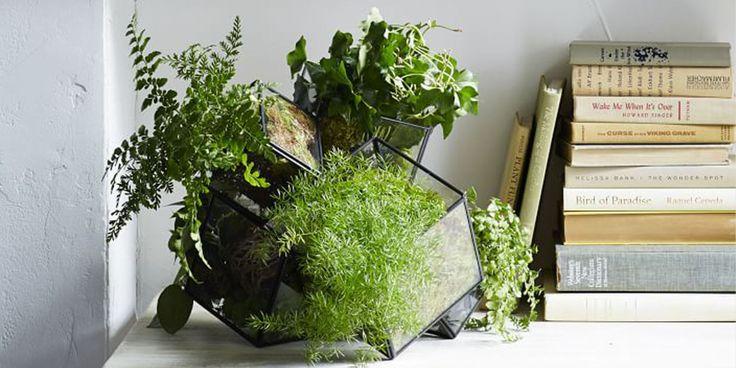 Op deze 5 manieren staan je planten er het mooist bij