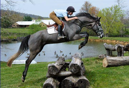 nice grey, nice jump!