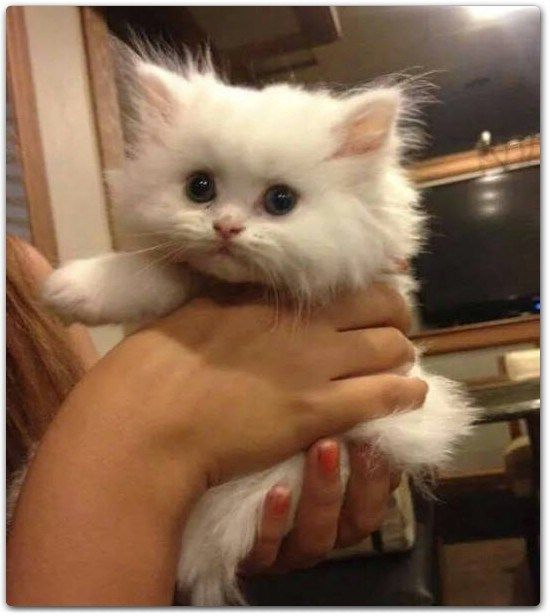 40 So Cute Kittens That You Ll Want To Cuddle Them Forever