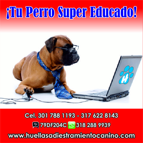 Tu Perro Super Educado - Animales en General - Todo Colombia