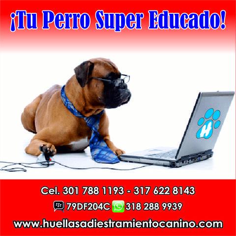 Tu Perro Super Educado - Animales en General - Todo Colombia