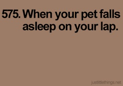 ;: Little Things, Pet Falls, Favorite Things, Puppy Kitty, Feeling, Lap Dogs, Simple Things, Baby